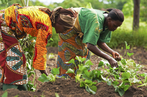 FG Has Opened Opportunities For Youths In Agriculture – NDE