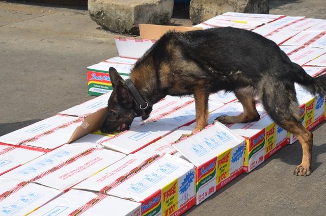 Dog Found Eating Newborn At Bauchi Dump