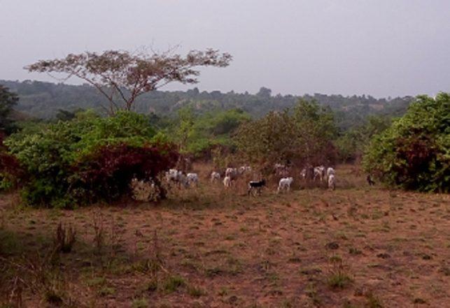 [Video] Fulani Herdsmen Celebrating After Jos Massacre