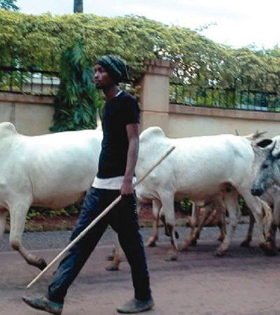Stop This Mindless Bloodbath By Herdsmen, Moro Tells Ortom