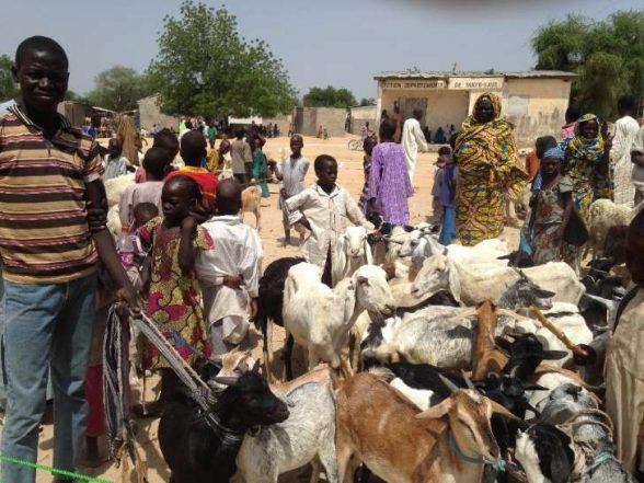 Shadow of jihadists falls on Cameroon's cattle farmers