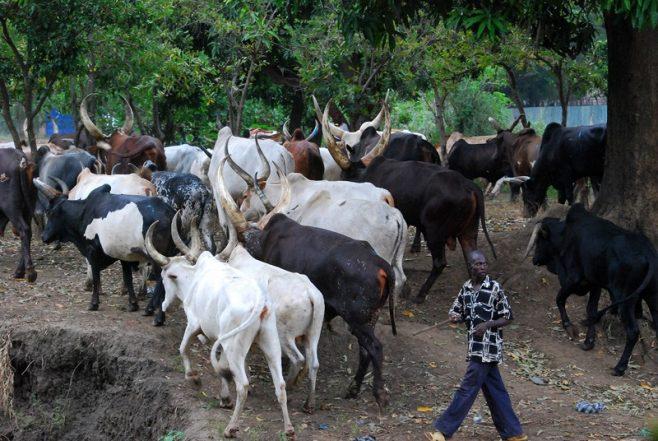 "Video Shows Armed 'Fulani Terrorists' Joyfully Exclaiming ""Sai Buhari"""