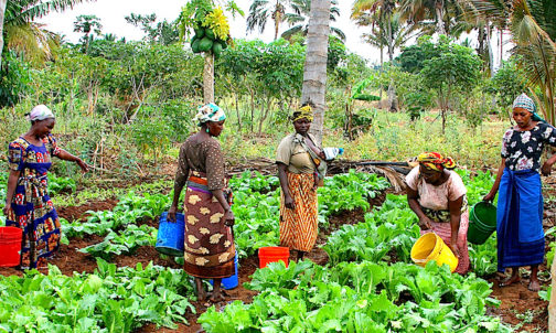 Farmers Embark On Premature Harvest Of Crops, As Flood Sacks Communities, Farms In Edo
