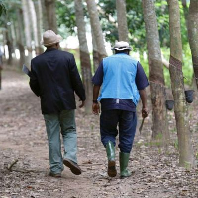 Cameroon separatists chop off fingers of plantation workers