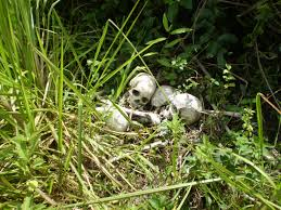 ABA: Police Discover Human Skeletons At Secondary School