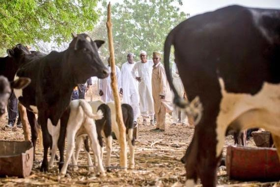 A Sectional President That Aids And Abets Terrorist Herdsmen Is Not Fit To Lead – By Lawrence Chinedu Nwobu