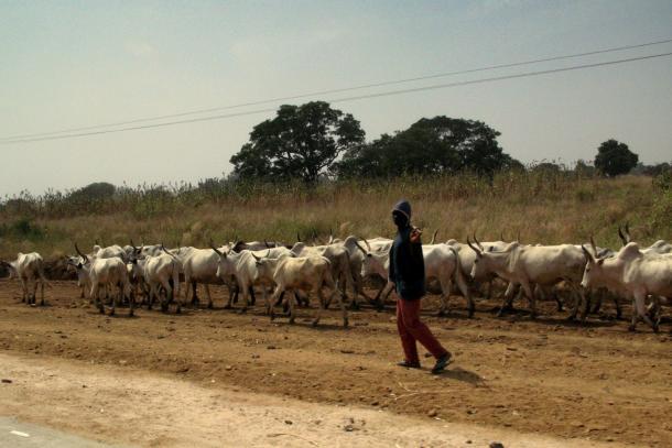 Cattle Herdsmen As The New Boko Haram? –ByReuben Abati