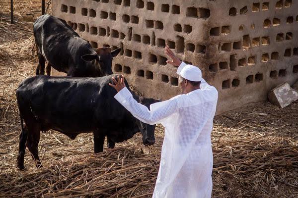 Disintegration Of Nigeria Not Yet Uhuru: Prophet Nwoko Reply's Buhari, Says Word Of God Must Come To Pass