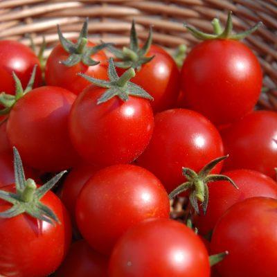Nigeria Targeted with Tomato virus Tuta absoluta: Pressured to adopt Monsanto Hybrid Tomatoes…Report