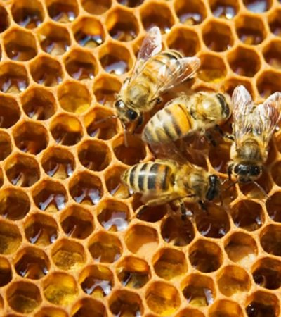 Nigeria Losing Over N30billion Annually To Honey Import – Expert