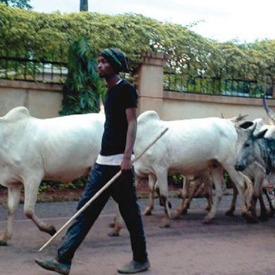 No Tension Between Enugu Community and Fulani Herdsmen – Group Faults Media Report