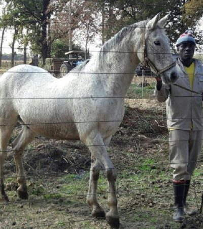 Bauchi Spends N96m For Purchase Of Horses