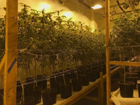 California police bust multimillion-dollar weed 'fortress'