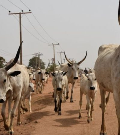 Security guard in court for allegedly stealing a cow