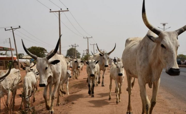 750 Cattle Rustlers, Kidnappers Renounce Violence In Kaduna
