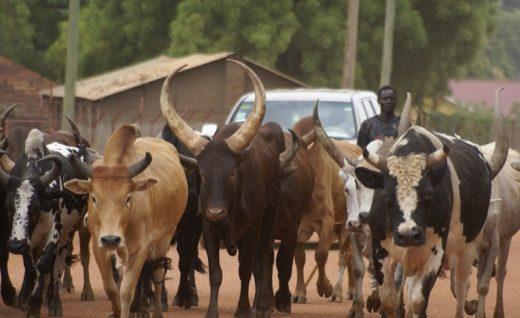 Herdsmen Crisis: Nigerian Govt To Reopen Grazing Reserves