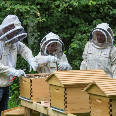 Kebbi Govt. trains over 100 youths on bee keeping