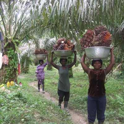 Buhari directs CBN to blacklist firms still importing palm oil