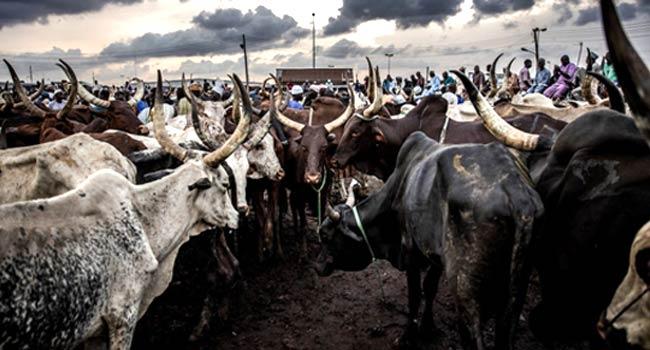 Ruga programme suspension: VON DG hails Buhari's decision
