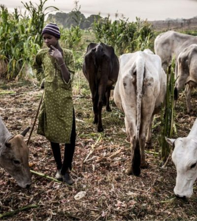 Benue Stakeholders Say No To FG's Livestock Transformation Plan