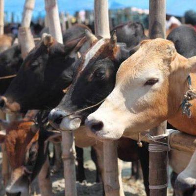 Kwara to establish international cattle market, animal husbandry in Nigeria